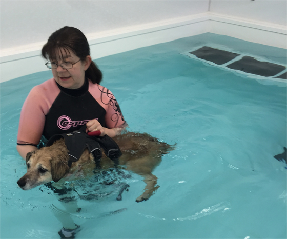 Hydrotherapy treatments - Dog in a hydrotherapy harness at Squirrell Lodge Centre Lincolnshire